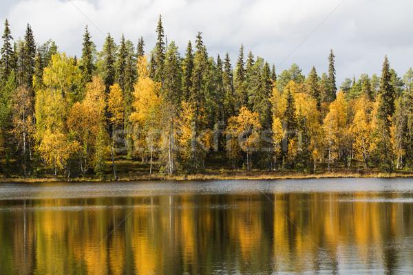Lago superfície outono floresta água Foto stock © vetdoctor