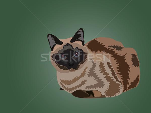 ül sziámi macska zöld szemek állat magányos Stock fotó © vetdoctor