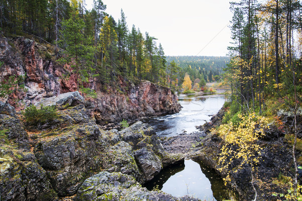 Coast of river covered by autumn forest Stock photo © vetdoctor