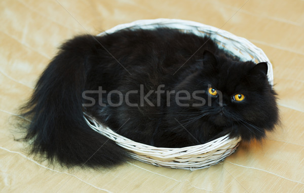 Male cat in basket on beige background Stock photo © vetdoctor