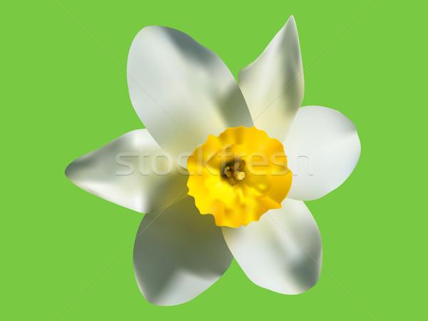 Ilustração primavera flor céu sol natureza Foto stock © vetdoctor