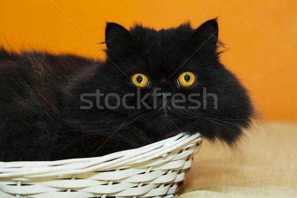 Male cat in basket on orange background Stock photo © vetdoctor