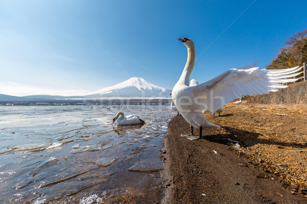Berg fuji gans meer winter landschap Stockfoto © vichie81