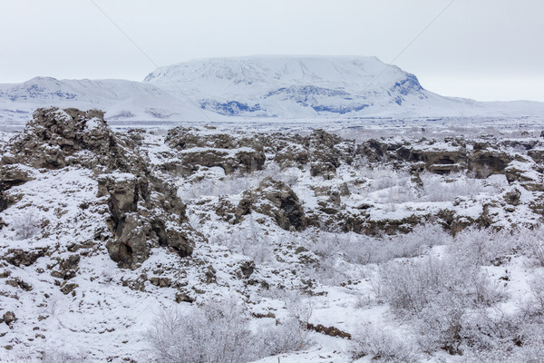 Winter landscape Dimmuborgir Lake Myvatn, Iceland Stock photo © vichie81