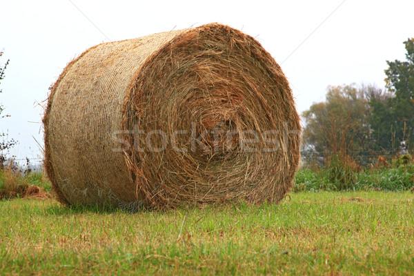 dry hay bale grass Stock photo © vichie81
