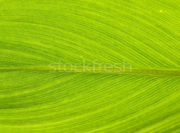 Leaf Texture Stock photo © vichie81