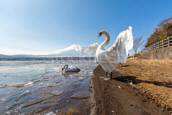 Dağ fuji kaz göl kış manzara Stok fotoğraf © vichie81