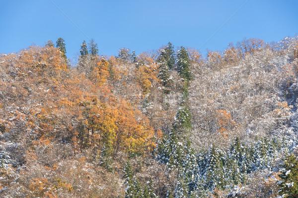 Zdjęcia stock: Jesienią · lasu · krajobraz · śniegu · drzewo · trawy