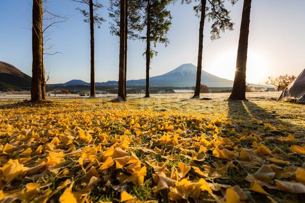 Monte Fuji nascer do sol água grama paisagem madrugada Foto stock © vichie81