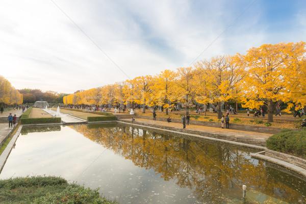 деревья осень Токио Япония дерево листьев Сток-фото © vichie81