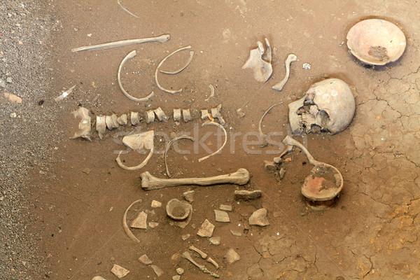 human skeleton Stock photo © vichie81