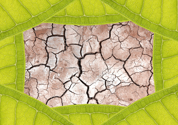 Dry terrain ground in leaf frame Stock photo © vichie81