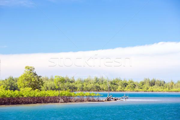 Mangrove forest coast Stock photo © vichie81
