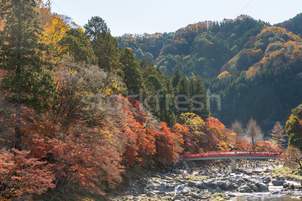 Korankei Forest autumn park Nagoya  Stock photo © vichie81