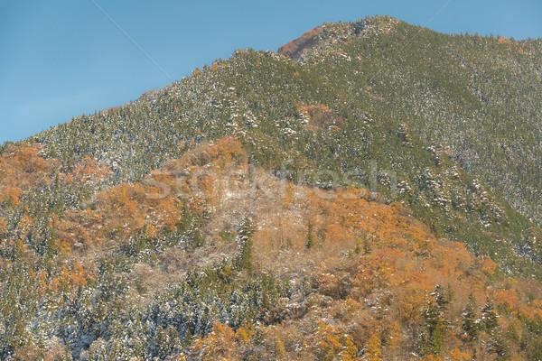 Zdjęcia stock: Jesienią · lasu · krajobraz · śniegu · drzewo · drogowego