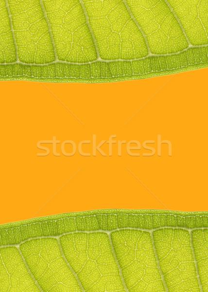 Leaf Frame Stock photo © vichie81