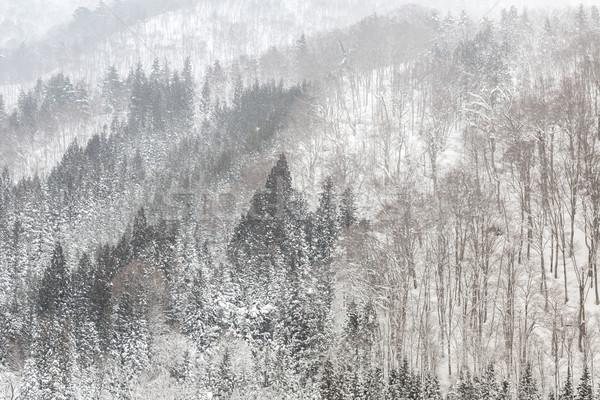 Hóesés erdő gyönyörű tél tájkép hó Stock fotó © vichie81