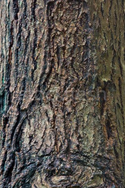 Wooden Bark Stock photo © vichie81