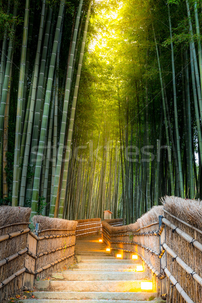 Arashiyama Bamboo Forest Stock photo © vichie81
