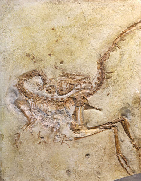 Foto d'archivio: Fossile · pietra · rock · esplorazione · pesce · natura