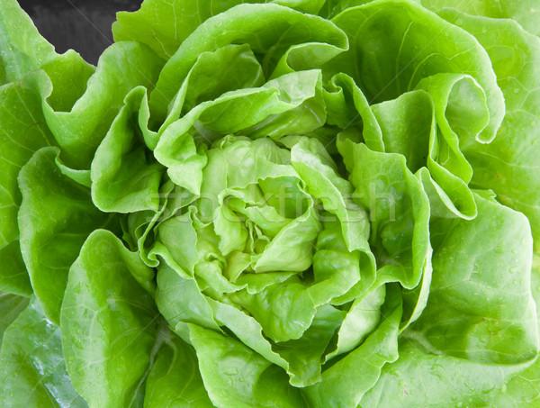 Zöld tölgy közelkép saláta természet háttér Stock fotó © vichie81