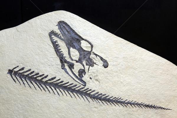 Fosil taş arama kaya yalıtılmış siyah Stok fotoğraf © vichie81