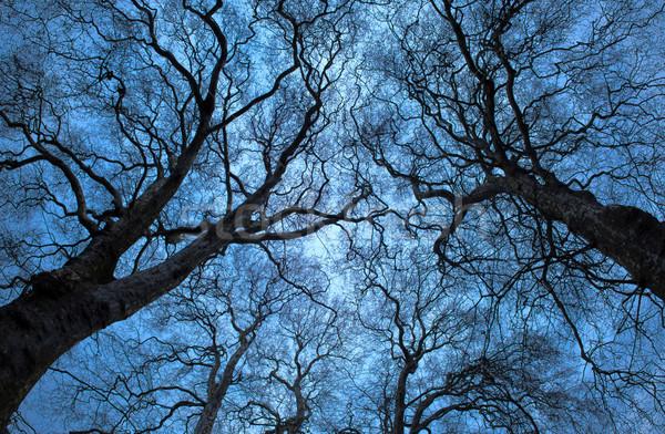 дерево силуэта Blue Sky древесины аннотация природы Сток-фото © vichie81
