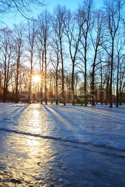 公園 冬 オスロ ノルウェー 日の出 空 ストックフォト © vichie81