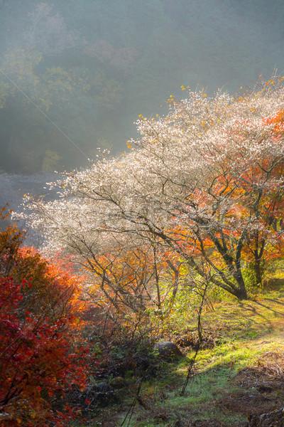 Nagoya, Obara Sakura in autumn Stock photo © vichie81