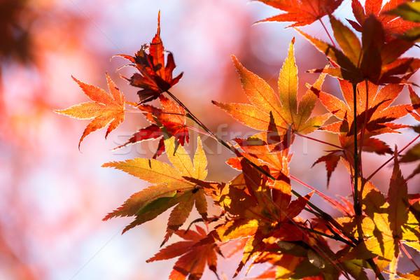 Najaar Geel oranje Rood mooie Stockfoto © vichie81