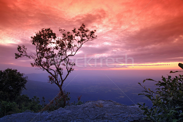 Stock foto: Einsamen · Baum · Klippe · Silhouette · schönen · Sonnenuntergang