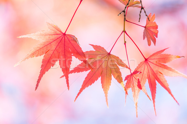 autumn background Stock photo © vichie81