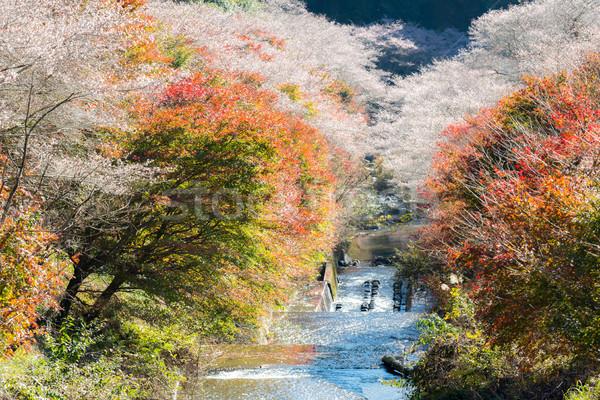 Sakura outono paisagem flor primavera floresta Foto stock © vichie81