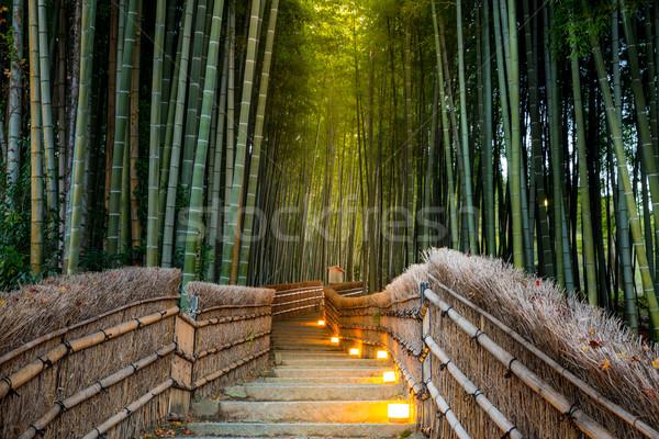 Bambu orman kyoto Japonya ahşap doğa Stok fotoğraf © vichie81