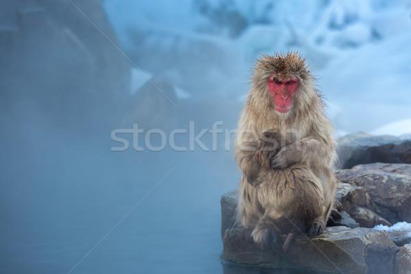 Nu aap japans sneeuw thermisch bad park Stockfoto © vichie81