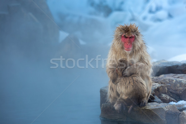 сейчас обезьяны Японский снега термальная ванна парка Сток-фото © vichie81