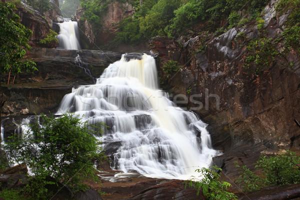 rainforest waterfall Stock photo © vichie81