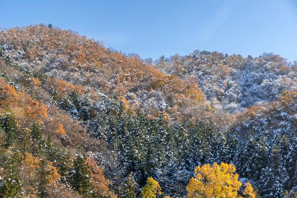 Autunno foresta panorama neve albero erba Foto d'archivio © vichie81