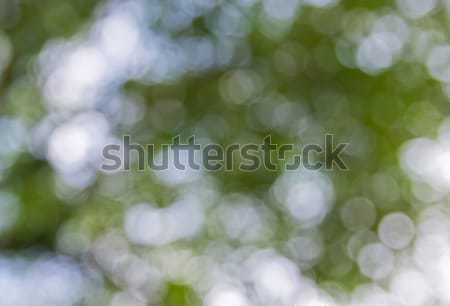 Verde bokeh abstract primavera luce bellezza Foto d'archivio © vichie81