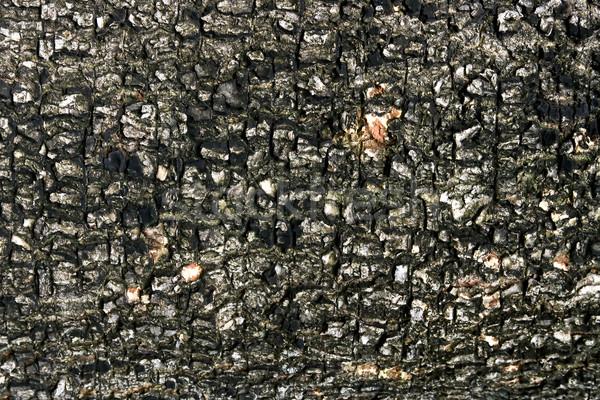 Casca textura árvore madeira floresta Foto stock © vichie81