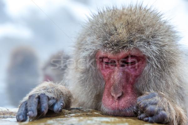 Sneeuw aap japans thermisch bad park man Stockfoto © vichie81