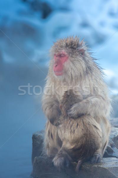 Sneeuw aap japans thermisch bad park voorjaar Stockfoto © vichie81