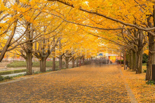 Ağaçlar sonbahar Tokyo Japonya ağaç yol Stok fotoğraf © vichie81
