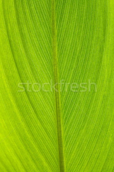 Green Leaf Background Stock photo © vichie81