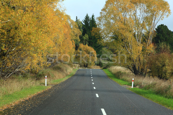 Longtemps route sur distance automne Photo stock © vichie81