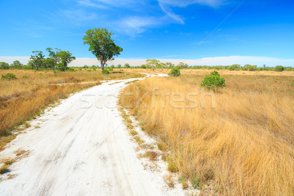 Savannah Landscape Stock photo © vichie81