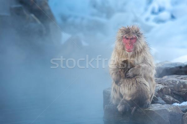 Сток-фото: снега · обезьяны · Японский · термальная · ванна · парка · весны