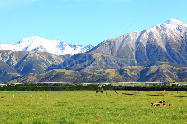 southern alps in New Zealand Stock photo © vichie81