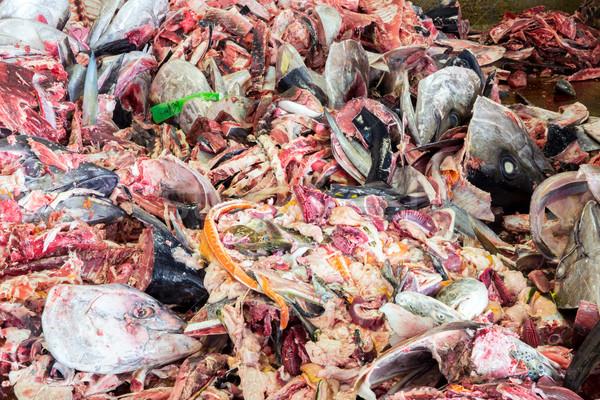 Raw Fish garbage Stock photo © vichie81