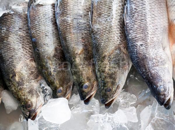 Fresh Seabass Stock photo © vichie81